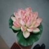 Leknínové květy